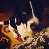 Feed me pretzels. #teddy #teddarcheese #boingle #boinglesofinstagram