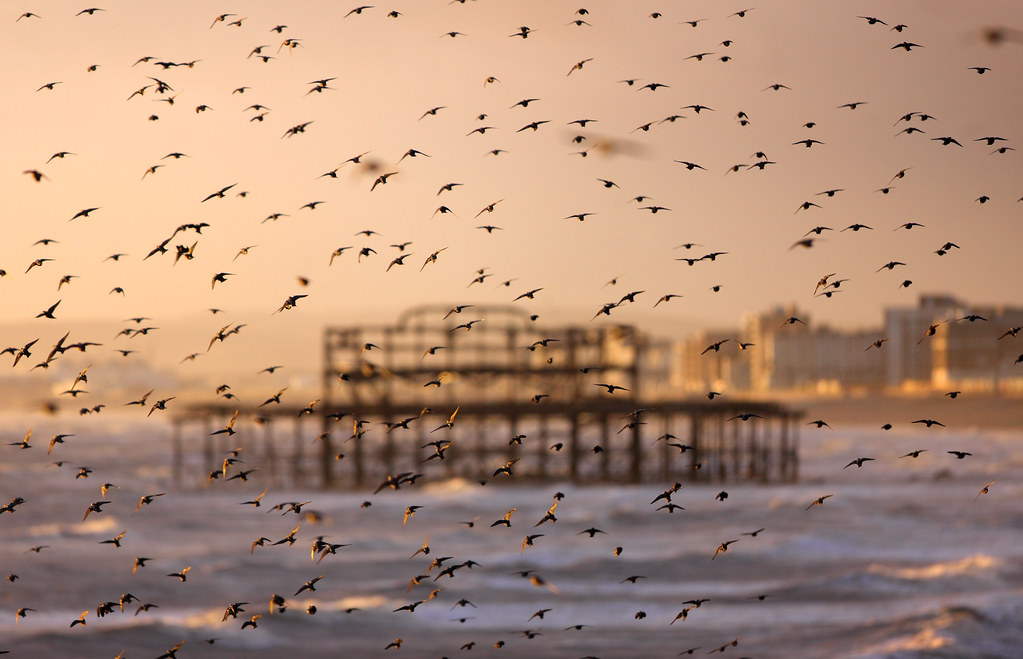Starlings and West Pier