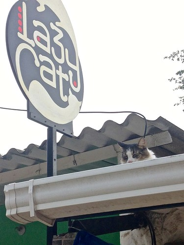 A cat being lazy in front of a restaurant called Lazy Cat... ironic?