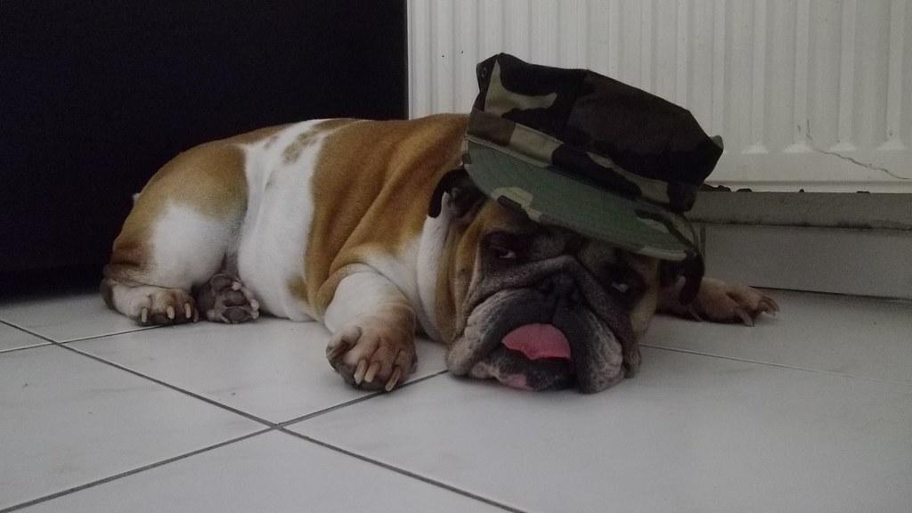 usmc bulldog style