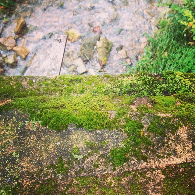I so love this mossy little bridge over a tiny creek, in the middle of a totally normal neighborhood. #foundwhilerunning in #easttennessee    #taralovesmornings