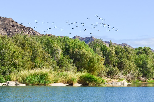 Birds over the Orange river