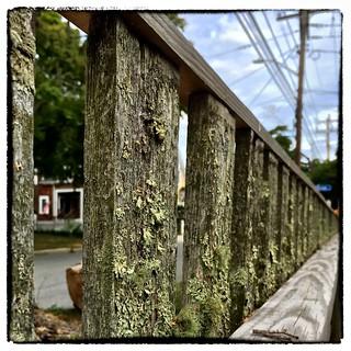 Lichen (& moss)