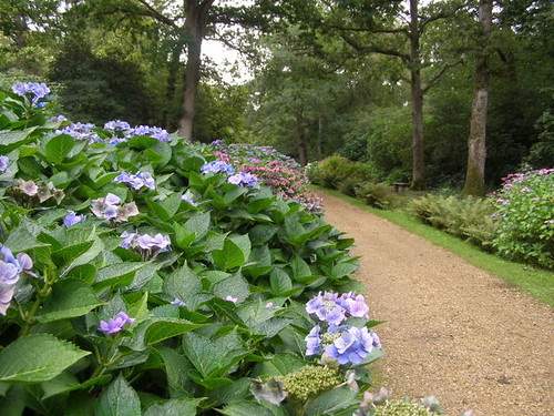 The Hydrangea Walk