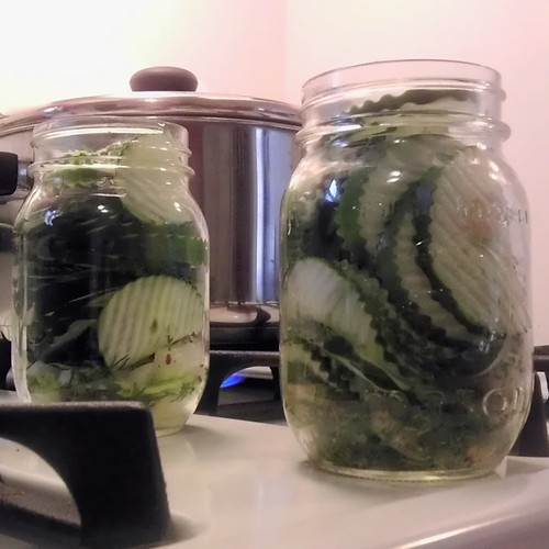 Easy DIY Dill Pickles
