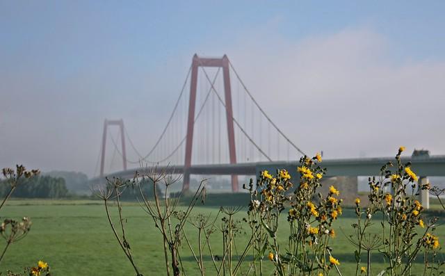 Goldengelchen Emmericher Rheinbrücke im Nebeldunst04