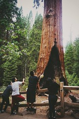 Grant tree with friends