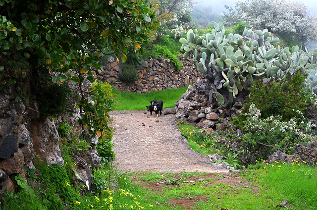 Discovering the missing piglets, El Hierro