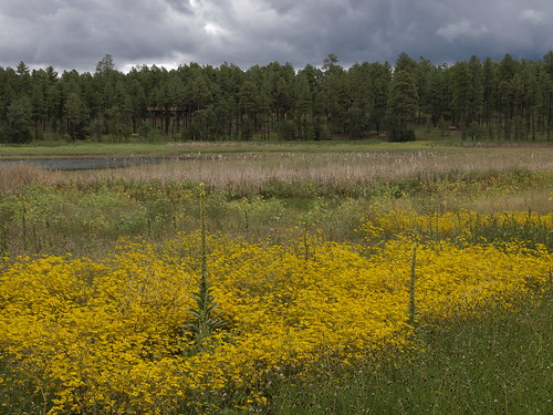clouds flowers wildflowers woodlandlake woodlandlakepark lakes nature pinetop pinetoparizona pinetoplakeside arizona pinetopvacation2014 riparian riparianzone riparianarea riparianhabitat