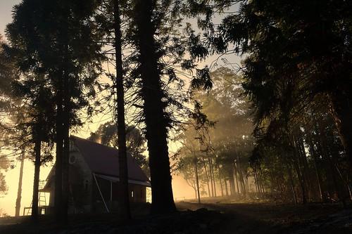 trees winter house misty fog countryside foggy earlymorning australia nsw renovation araucariaceae treesinfog northernrivers bunyapines exchurch araucariabidwillii morninglandscape houseinfog keerrong