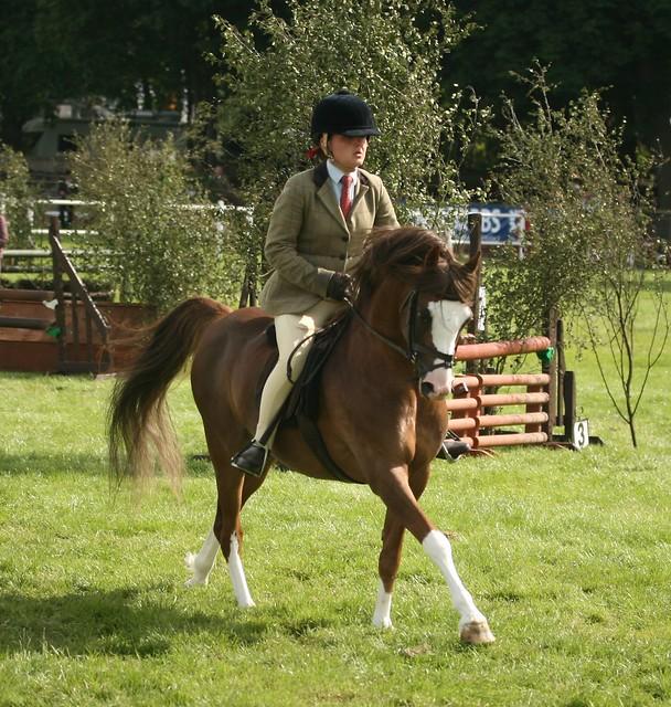 Working Hunter Pony