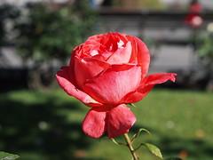 Fiori-Flowers