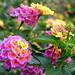 Beautiful wild flowers por Raul Jaso