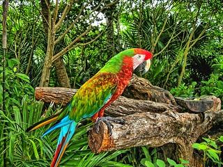 Parrots at Xel-Ha