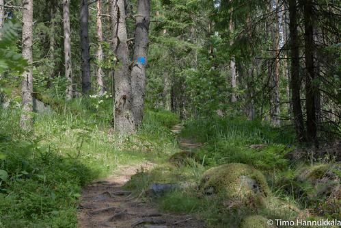 nature finland walking nikon path fi ruovesi siikaneva pirkanmaa d7100 soidensuojelualue