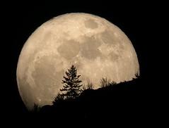 super luna 1