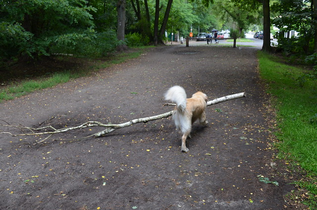 Grunewald Berlin_ dog on forest path with tree stick