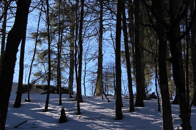 Winter im Schwarzwald I