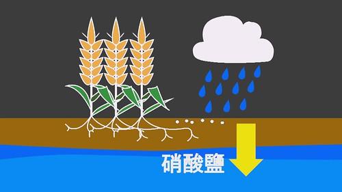 過量硝酸鹽會污染地下水