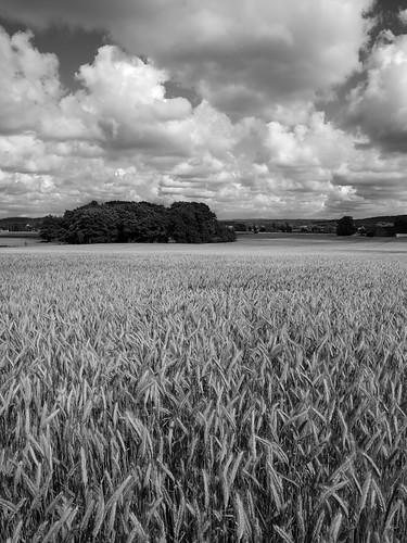 sky cloud field landscape sweden farming agriculture