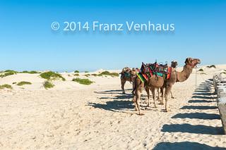Image of Stockton Beach near Medowie. ocean sky coast sand skies ride pacific dunes australia newsouthwales aus camels theportstephensarea