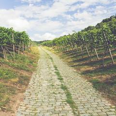 Stuttgarter Weinwanderweg