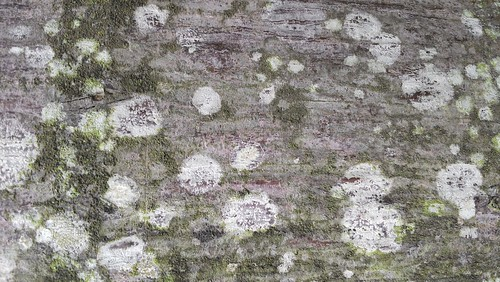 several colors in bark