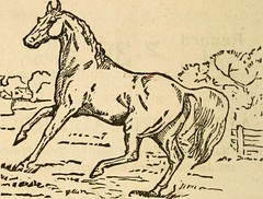 """Image from page 7 of """"Turf, field and farm"""" (1889)"""