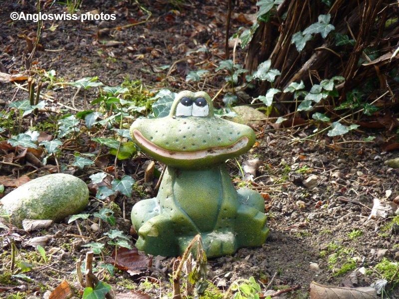 The Garden Frog