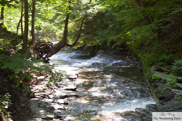 The river at Grimes Glen
