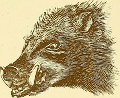"Image from page 471 of ""Records of big game with their distribution, characteristics, dimensions, weights, and horn & tusk measurements"" (1914)"