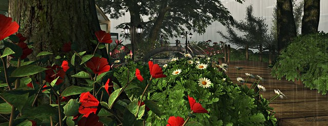 'Flowers at La Botanique' by Tizzy Canucci, on Flickr