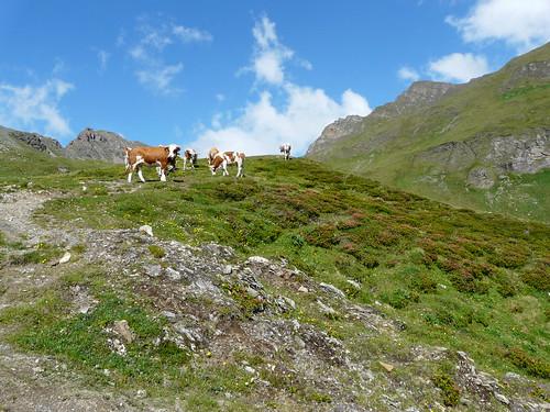 Südtirol_2014