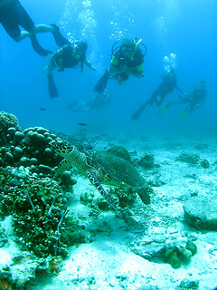 "<img src=""padi-diving-batu-malang-tioman-island-malaysia.jpg"" alt=""PADI diving, Batu Malang, Tioman Island, Malaysia"" />"