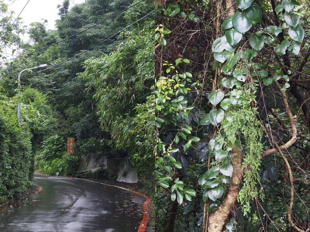 luontoa3
