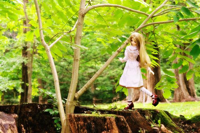 ドルフィー・ドリーム:小牧 愛佳:キミを探して迷う森
