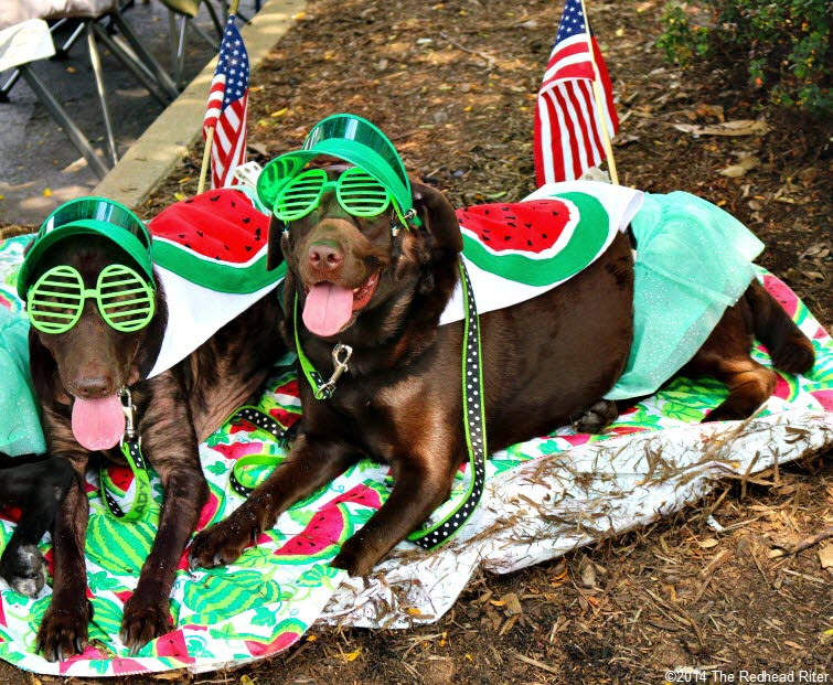 31st Annual Carytown Watermelon Festival,  Richmond, Virginia - dogs dressed up