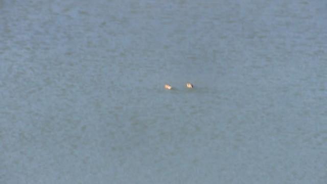 MVI_4806 circling ducks LLC