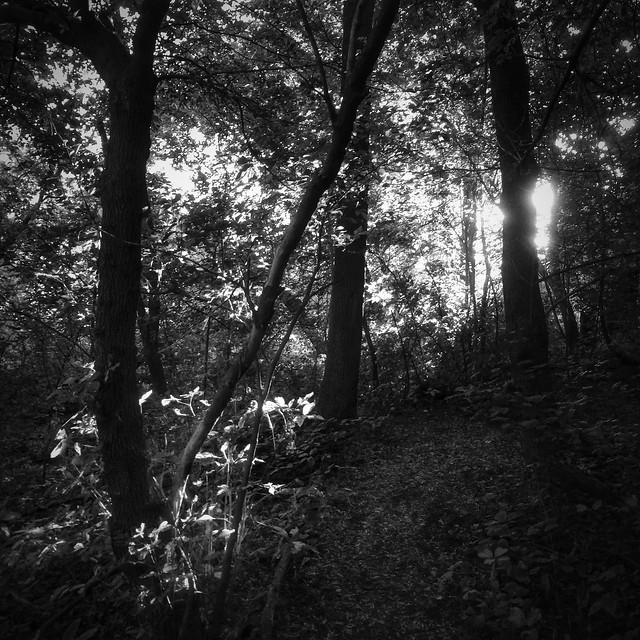Equinox in Black and White