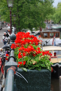 Geraniums on Bridge over Canal in Amsterdam, Holland