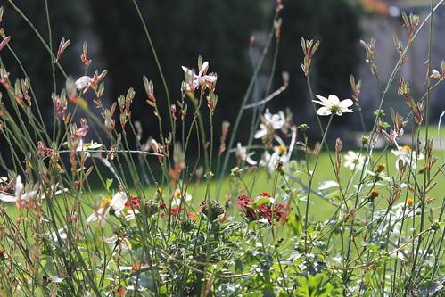 flowers poland krakow kraków