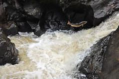 Finn river