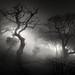 Forbidden path by Scott Baldock