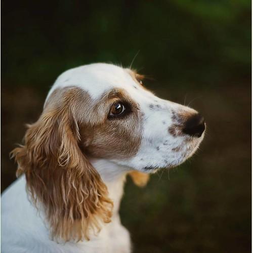 Oddie!! #dog #pet #love #cute