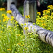 Small photo of Fence in Summer