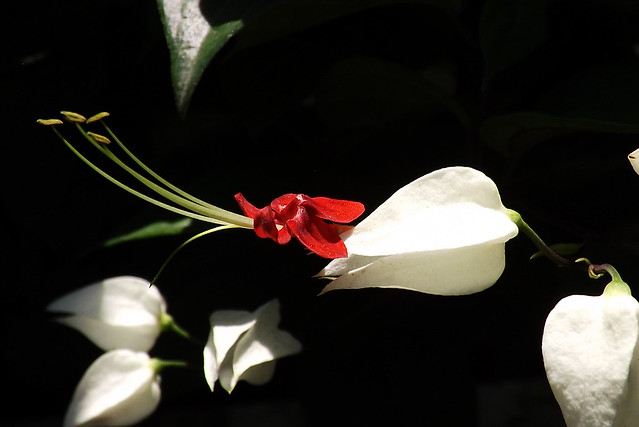 Aretes Blanco y Rojo., Fujifilm FinePix SL260