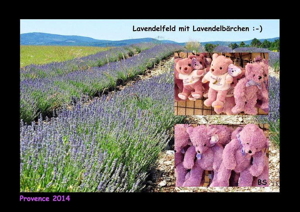 Lavendel Lavendelfeld Provence lila lilafarben Lavendelbärchen