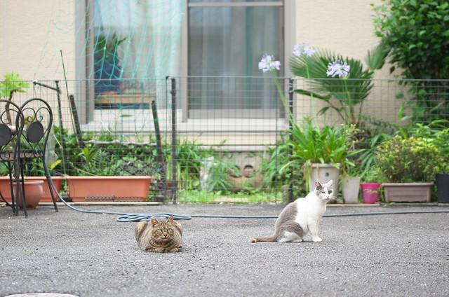 谷中路地裏散歩 ネコ 2014年6月28日