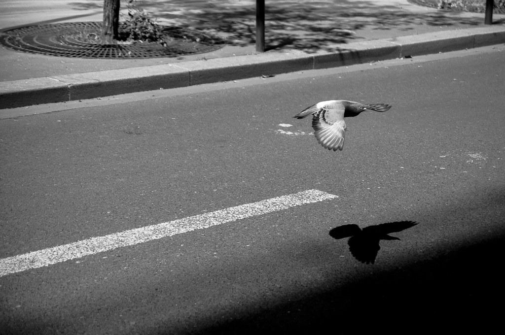 Pigeon et son ombre