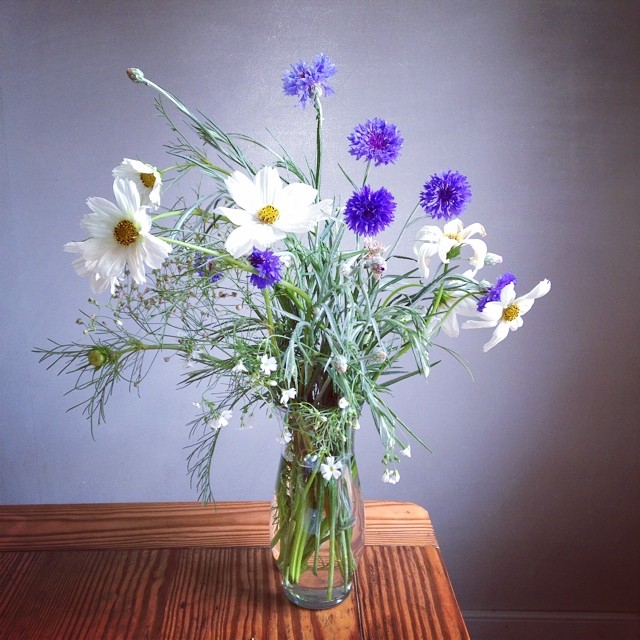 Another bouquet from the front yard #wildflowers #flowerlove